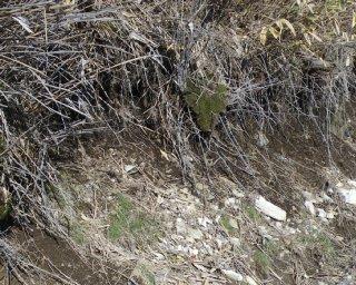 産地 産状 母岩付き満バン柘榴石産地